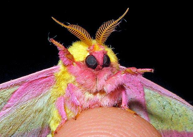 Moths_1586867a