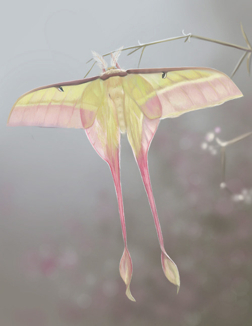pinkgreenmoth