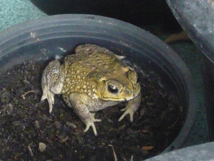 toad03
