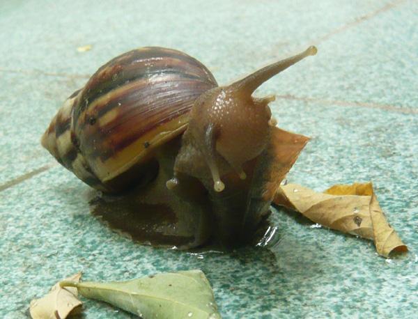 Snail_nom
