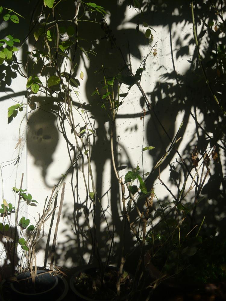shadow_s