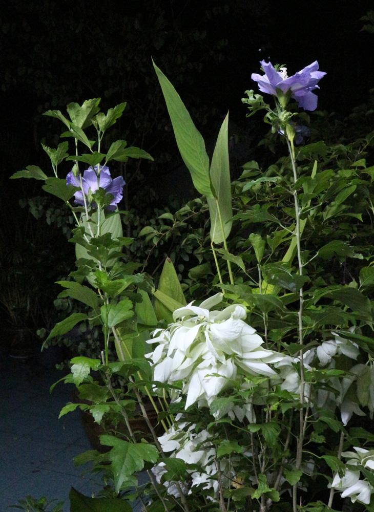 nightgarden05